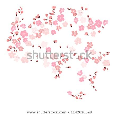 Badem ağaç çiçekler makro Stok fotoğraf © sirylok
