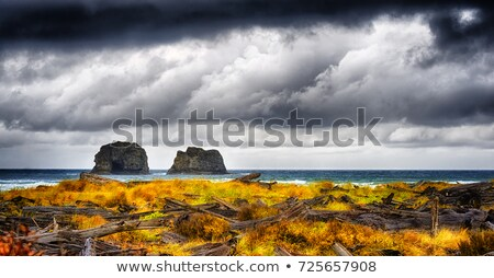 Large rocks and vegetation, Oregon coast. stock photo © Rigucci