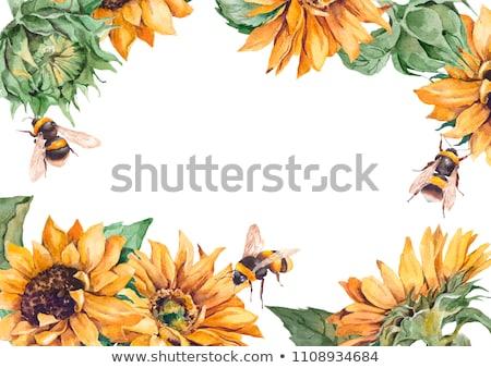 weinig · bee · zonnebloem · foto · vergadering - stockfoto © hraska