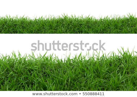 Blades of grass on a grass meadow Stock photo © Ustofre9