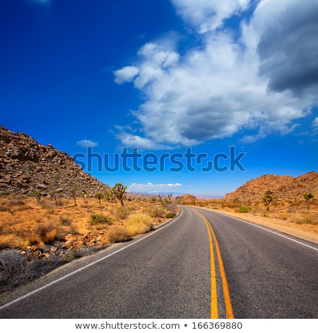 Joshua Tree boulevard Road in Yucca Valley desert California Stock photo © lunamarina