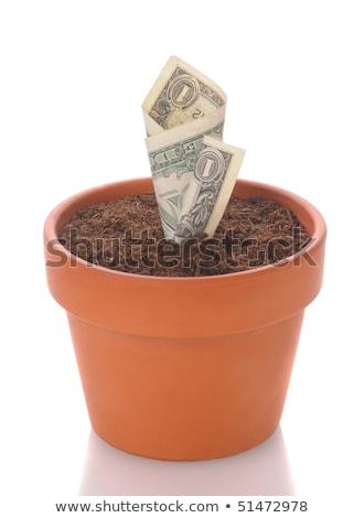 növekvő · dollár · virágcserép · kép · vegyes · tartalom - stock fotó © stevanovicigor