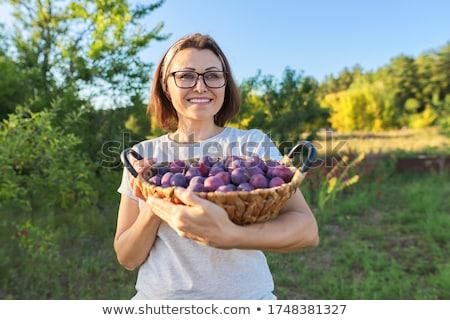 作り出す · フルーツ · 女性 · 梅 · 孤立した - ストックフォト © dgilder