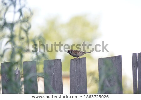 sparrow in wire fence Stock photo © taviphoto