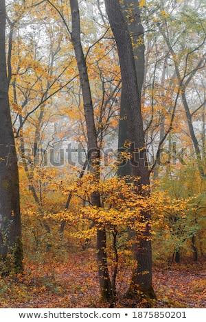 Nebuloso dia floresta vale rio aldeia Foto stock © gsermek