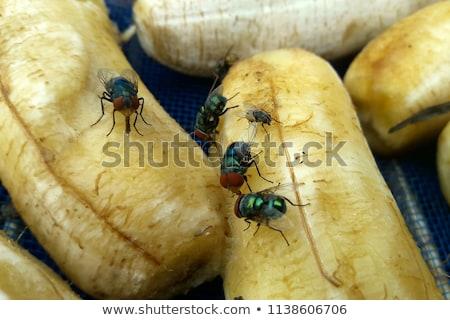 フライ 食べ マクロ クローズアップ ショット 自然 ストックフォト © brm1949
