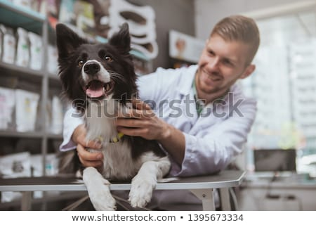Cheerful veterinarian examining a cute dog Stock photo © wavebreak_media