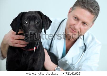 artsen · omhoog · labrador · vrouw · gelukkig · medische - stockfoto © wavebreak_media