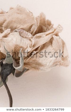 triest · steeg · zwarte · donkere · bloem · hartvorm - stockfoto © caimacanul