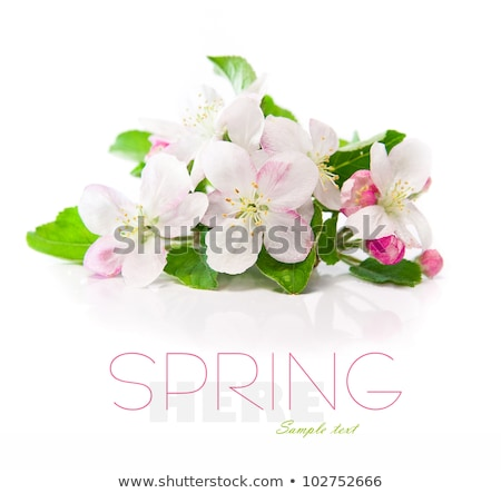 Maçã flores amostra texto árvore Foto stock © tetkoren