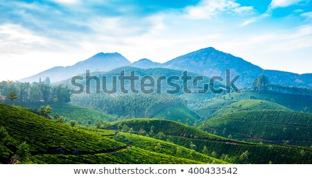 tea fields and mountains in munnar stock photo © juhku