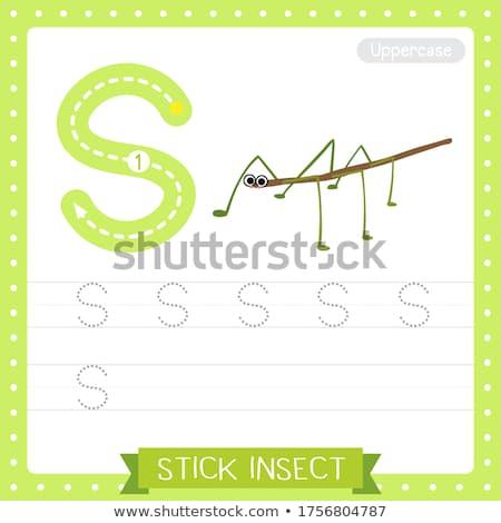 Brief stick insect illustratie natuur achtergrond Stockfoto © bluering