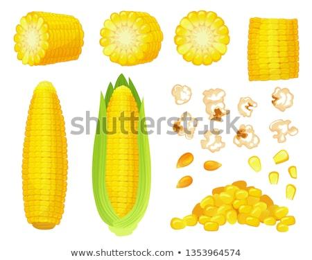 Fresh Golden Corn Grains Isolated Illustration Stock photo © robuart