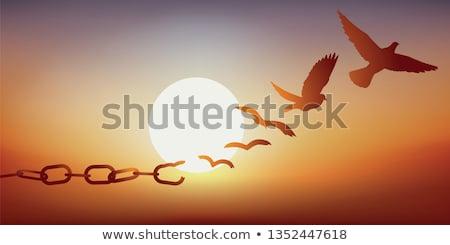 飛行 · 鳥 · オレンジ · 日没 · 雲 · 自然 - ストックフォト © psychoshadow