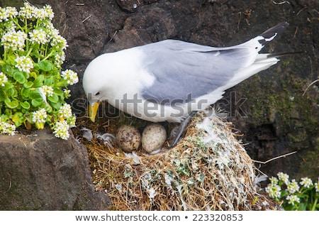 два птица яйца гнезда иллюстрация дерево Сток-фото © colematt