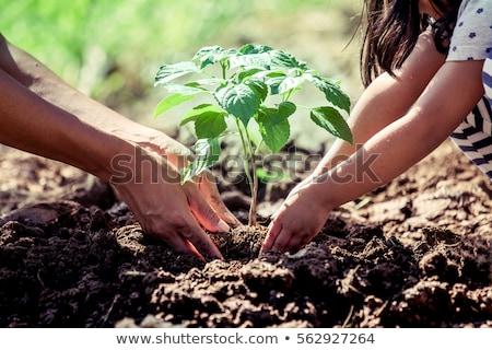 Kinderen planten tuingereedschap plant boom Stockfoto © ayelet_keshet