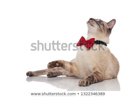 curious grey cat wearing red bowtie lying and looking up Stock photo © feedough