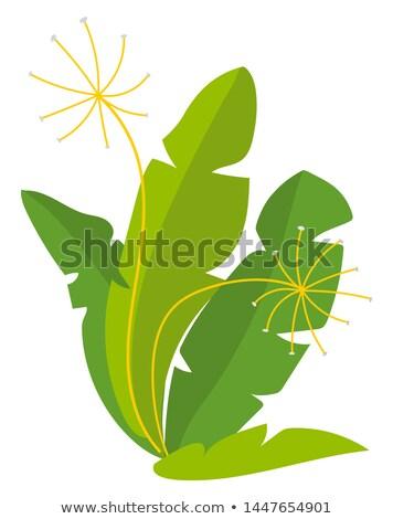 Vegan produto funcho colheita vetor verde Foto stock © robuart