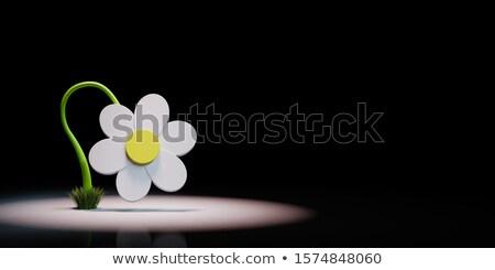 Karikatür papatya çiçek biçim siyah beyaz 3D Stok fotoğraf © make