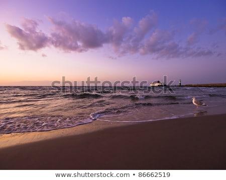 Evening Sky with Seagull Stock photo © nailiaschwarz