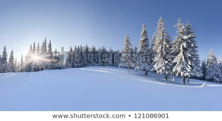 Beautiful winter scenery with footpath Stock photo © photocreo