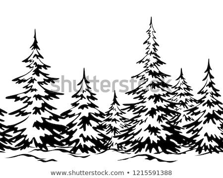 snowbank firtree Stock photo © Paha_L
