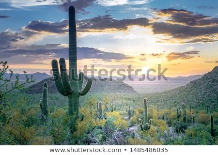 Arizona · naplemente · magas · sivatag · naplemente · természet - stock fotó © phbcz