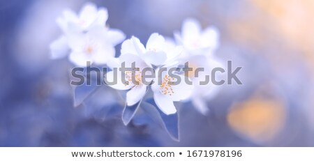Abstract Background Soft Focus Flower Petals  Stock photo © scheriton