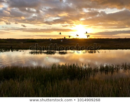 Cyprys jezioro zmierzch półwysep parku ontario Zdjęcia stock © ca2hill