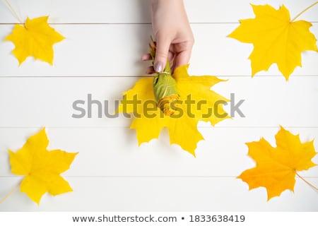 カエデの葉 13 ツリー 自然 光 葉 ストックフォト © LianeM