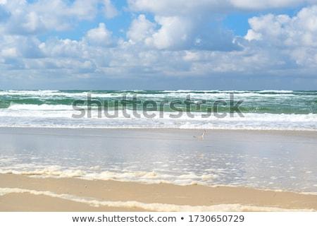 Mewy pusty plaży rodziny charakter morza Zdjęcia stock © tannjuska