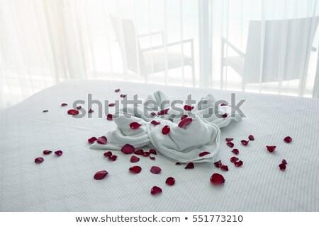 güller · yaprakları · pembe · çiçek · çerçeve · beyaz - stok fotoğraf © ultrapro