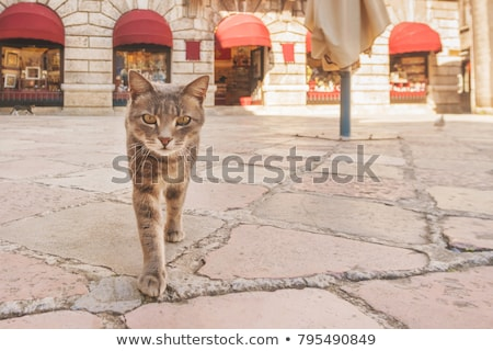 cat in city Stock photo © elwynn