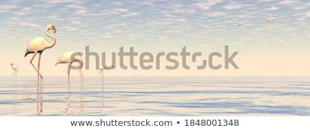Rendering 3d piedi acqua arancione tramonto Foto d'archivio © Elenarts