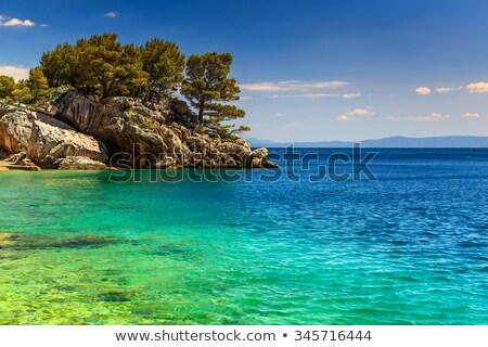 сосна пляж Хорватия воды природы морем Сток-фото © anshar
