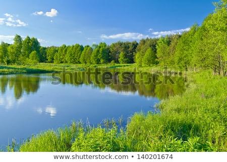 folyó · erdő · hdr · tavasz · levél · nyár - stock fotó © bogumil