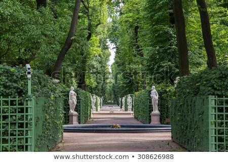зеленый · парка · лет · Россия · дерево · природы - Сток-фото © ruslanomega