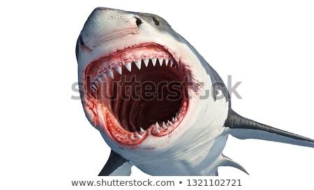 shark attack   3d render stock photo © elenarts
