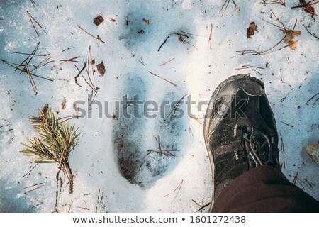 feet of animals in snow Stock photo © meinzahn