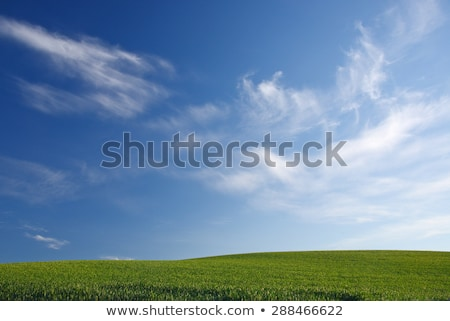 Green Wheat Grass Blue Skies Palouse Washington State Stock photo © billperry