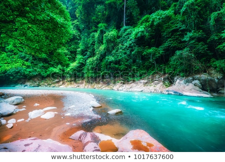 Stony river bed in a lush green jungle Stock photo © juniart