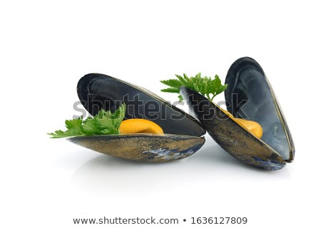 two mussels  isolated on white background Stock photo © Antonio-S
