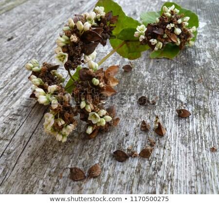 amande · branche · fleurir · isolé · blanche · fleurs - photo stock © vlad_star
