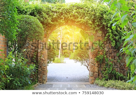 ivy covered background Stock photo © ozaiachin