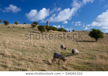 On pasture at Cape Arcona, Ruegen Island Stock photo © CaptureLight