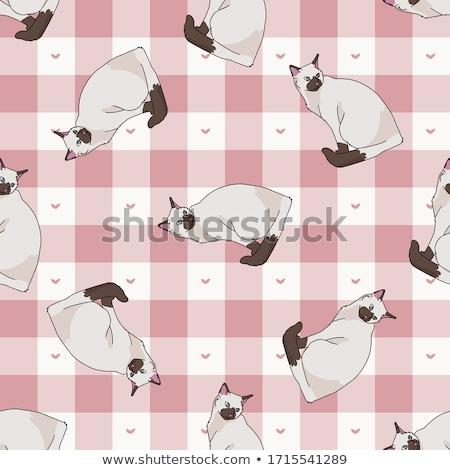 todo · carácter · gatos · punteado · líneas - foto stock © gigi_linquiet