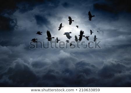鳥 劇的な 雲 飛行 青空 空 ストックフォト © artjazz