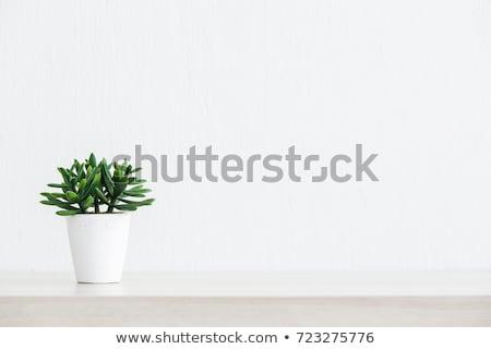 Ağaç beyaz pot tablo ofis ev Stok fotoğraf © Boophuket