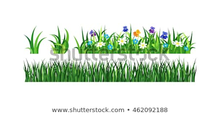 Frescos hierba verde raíces salud ambiental Foto stock © vlad_star