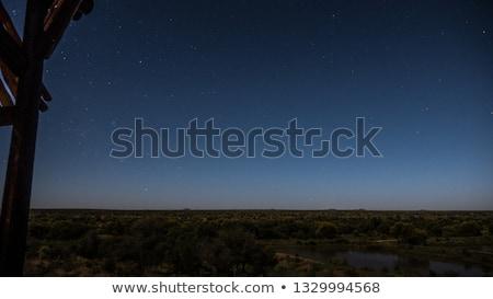 Gepárd kamera park Dél-Afrika Afrika ünnep Stock fotó © simoneeman